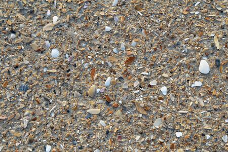 Bits of broken weathered sea shells and small pebbles on a sandy beach background Stock Photo - 13349909