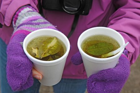 altitude: Two white styrofoam cups of coca tea for alleviation of altitude sickness in the highlands of Ecuador Stock Photo