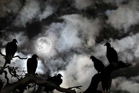몇몇 독수리 흰 구름에 짜증 검은 하늘에 떠오르는 보름달 실루엣으로 볼 수 있습니다