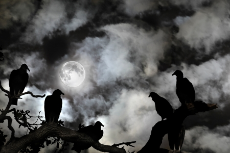 roosting: Several vultures are viewed as silhouettes by a rising full moon against a spooky black sky with white clouds