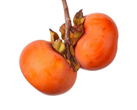 persimmon: Dos frutas maduras de Asia o de Diospyros kaki japonés caqui cultivar Ichi Ki Kei Jiro colgar en el árbol aislados contra blancos