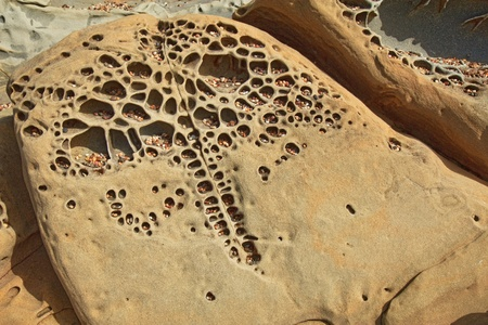 Interesting tafoni formations with pebbles that looks sort of like an elephant in Pigeon Point formation sandstone at Bean Hollow State Beach in San Mateo County, California Stock Photo - 18719215