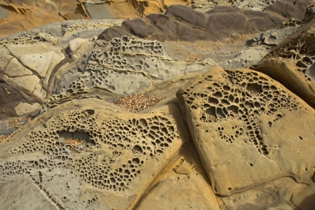 Interesting tafoni formations in Pigeon Point formation sandstone at Bean Hollow State Beach in San Mateo County, California Stock Photo - 23061648
