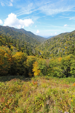 Autumn leaves starting to turn in Great Smoky Mountains National Park against a bright blue sky and white clouds photo