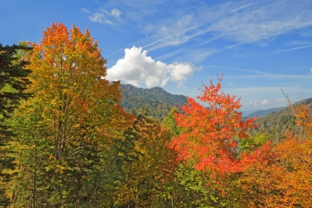 great smoky mountains national park: Autumn leaves starting to turn in Great Smoky Mountains National Park against a bright blue sky and white clouds