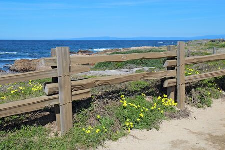 Split-rail fence and yellow flowers of the escaped weed Bermuda buttercup (Oxalis pes-caprae) at Asilomar State Beach on the Monterey Peninsula in Pacific Grove, California Stok Fotoğraf