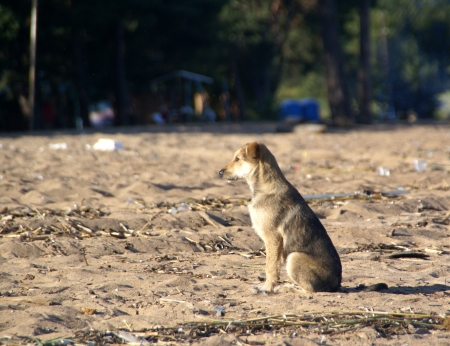 Puppy sitting on the sand waits
