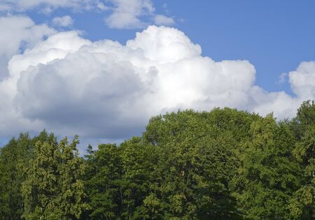 Nice white clouds above green forest