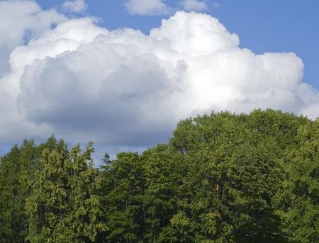 Nubes blancas sobre verde bosque Foto de archivo