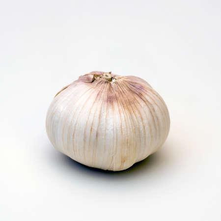 alliaceae: Garlic
