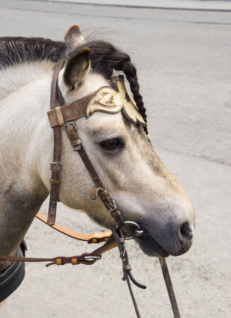 Pony Foto de archivo