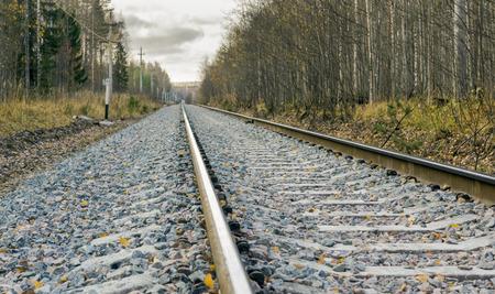 forest railway: Railway in the wild autumn forest