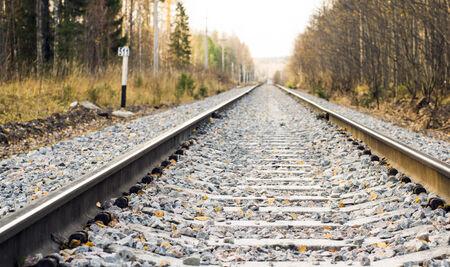 autumn forest: Ferrovia nella foresta di autunno selvaggia Archivio Fotografico