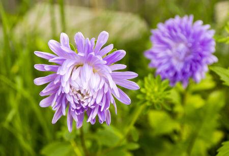 Flores de verano Niza