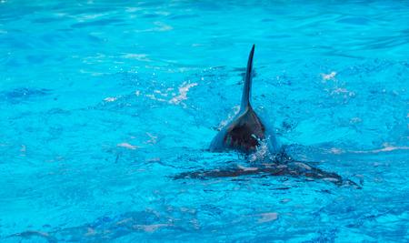 flipper: Le flipper des dauphins Banque d'images