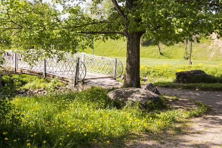 �lamo cerca del puente sobre el r�o en verano
