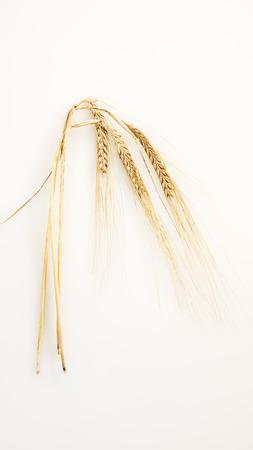Golden wheat ears Stock Photo