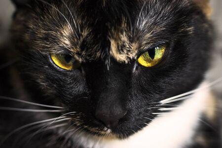 Face of cat close