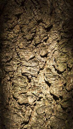 Pine tree bark frame