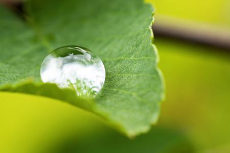 La lluvia ca�da en la hoja verde