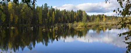 quagmire: Panorama of beautiful forest swamp