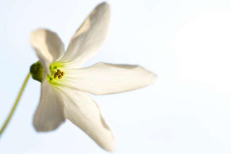 Macro of small flower Stock Photo