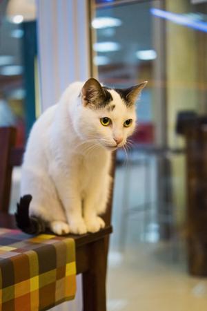 catlike: Cat on table Stock Photo