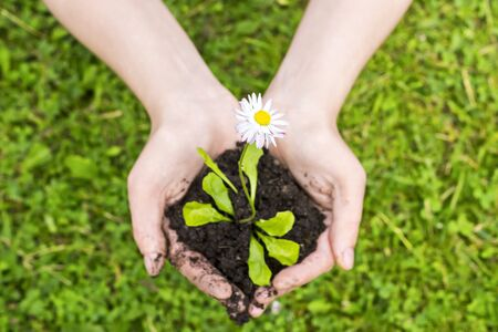 Natural flower seedling in hands Stock Photo