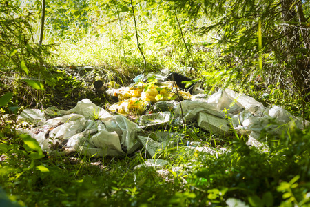 defilement: Pile of garbage piled in wild woods Stock Photo