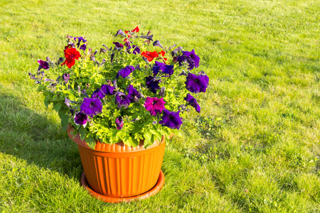 Natural flowers in pot outside Stock Photo