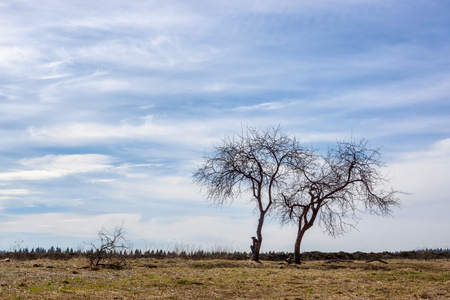 Landscape, trees in a field in spring Stock Photo