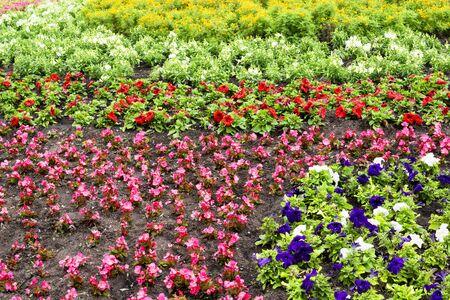 Flower bed full of flowers