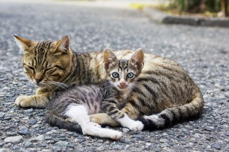 mamma: Mom cat and kitten