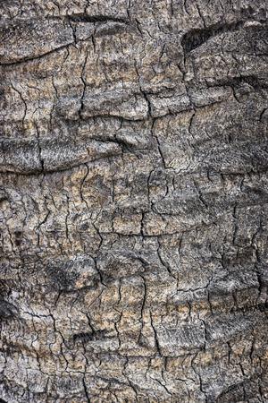 Palm tree bark texture Stock Photo