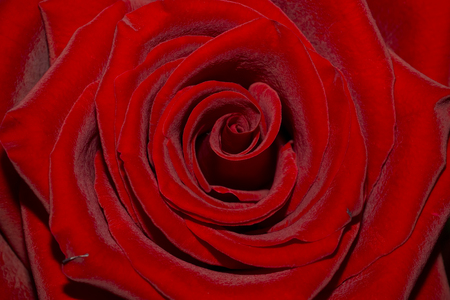 Chic red rose petals background