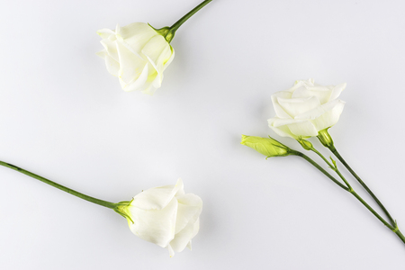 Delicate white roses geometry background Stock Photo
