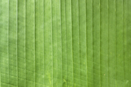 Pattern of green palm tree leaf Stock Photo