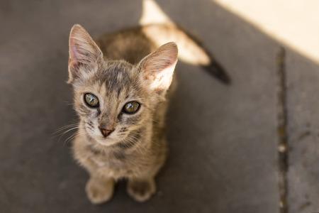 Cute little kitten looks upward
