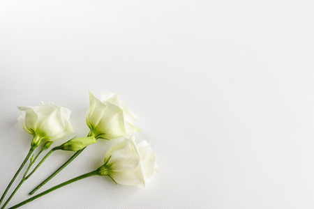 Delicate tiny white flowers on white background