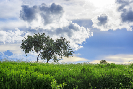 Luxurious juicy tall grass meadow and lonely tree