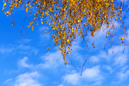 Blue sky backgound and foliage in autumn