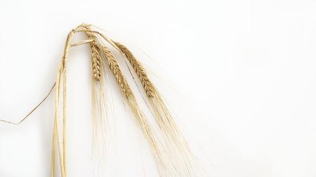 Organic ears of ripe wheat on white background Reklamní fotografie