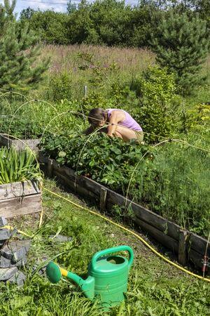 Woman growing vegetables in garden at summer plot land