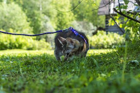 Half-year kitten in countryside on grass in sunny summer day Reklamní fotografie