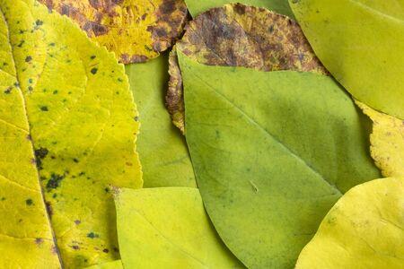 Autumn leaves of apple tree macro background Фото со стока