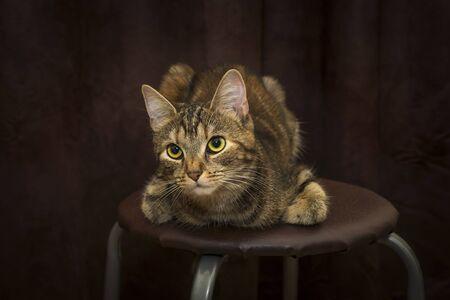 Pretty kitten with big beautiful eyes posing on stool