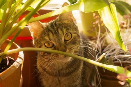 A kitten among flowers and plants in rays of bright sun