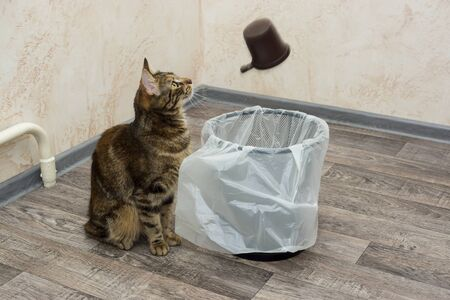 Kitten keeps track of plastic coffee cup that falls into a bin with a garbage