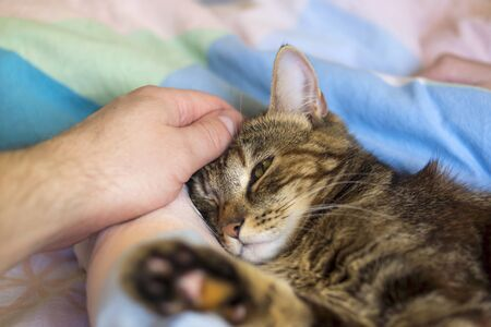 Caring human hand stroking head of young drowsing cat