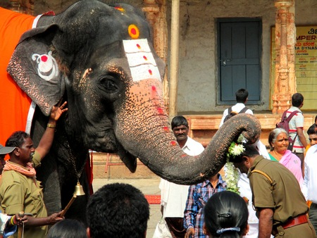 tranquillity: Lakshmi the elephant blessing a local police officer in the Virupaksha temple at the Hampi Festival in Hampi, India - January 10th 2014 Editorial